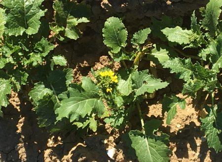 Semine, fiori e giochi