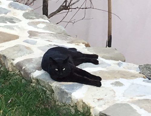 La primavera del gatto nero.